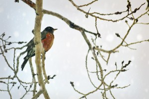 LeahMcQueen - Bird